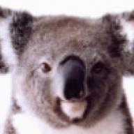 Koala_Steamed